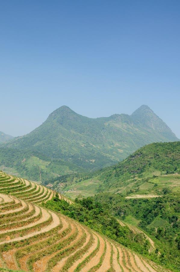 Rice terraces in Vietnam stock images