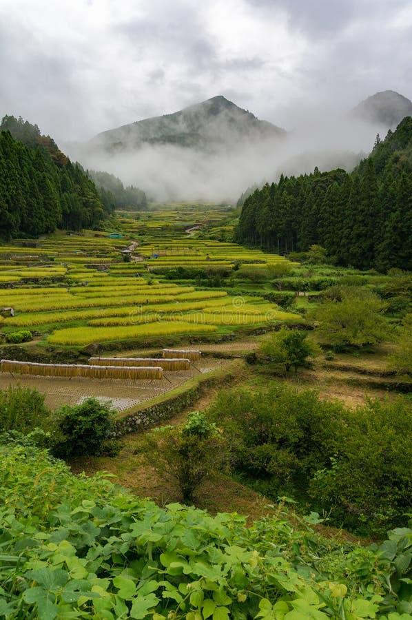 Rice terraces of Youtsuya village, Japan royalty free stock photo