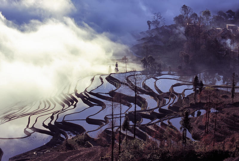 Rice terraces of yuanyang in the morning. Ancient rice terraces of yuanyang,Yunnan,China stock photos