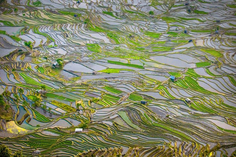 Download Rice Terraces Of Yuanyang, Yunnan, China Stock Photo - Image: 34116290
