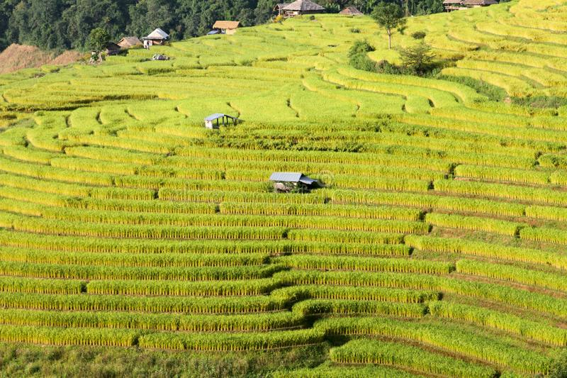 Rice terracs in the plateau. stock images