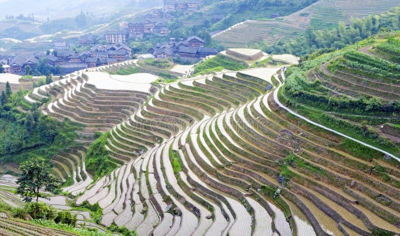 rice terrasserar byn royaltyfria bilder