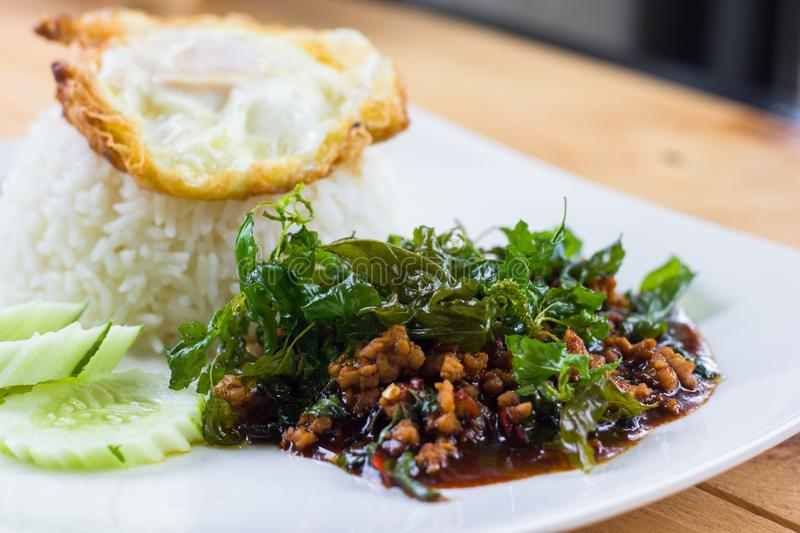 Rice topped with stir-fried fried egg and pork and basil. stock image
