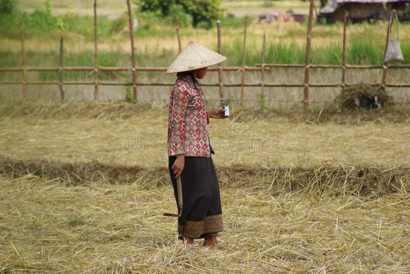 Rice Worker stock image