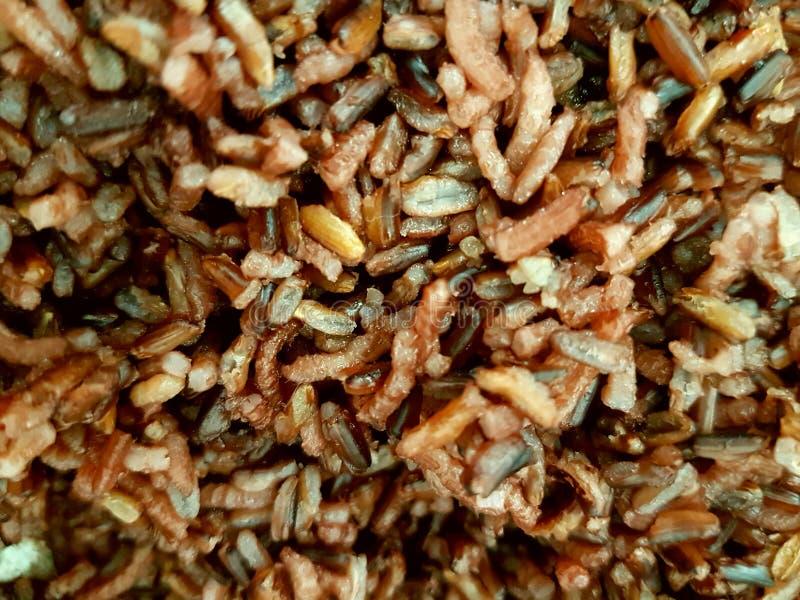 Riceberry Rice fotografia royalty free