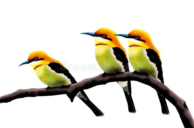 Ricebirds principales anaranjados hermosos stock de ilustración