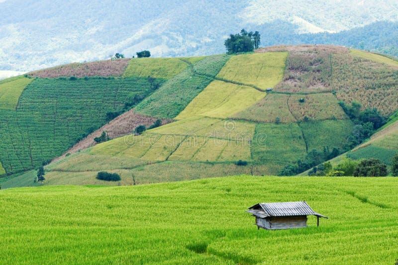 Download Ricefält fotografering för bildbyråer. Bild av lantgård - 27285637