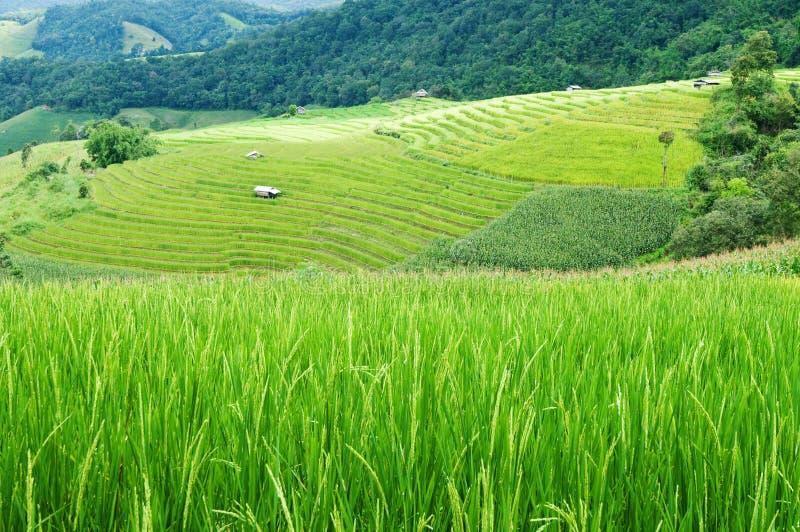 Download Ricefält fotografering för bildbyråer. Bild av odling - 27285747