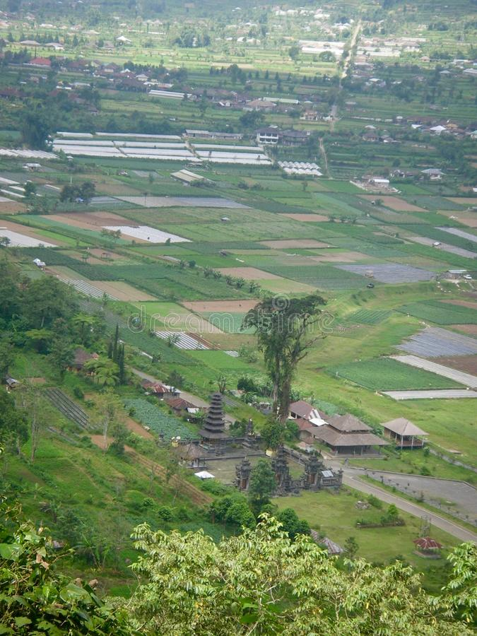 Ricefield在巴厘岛用水 免版税库存照片