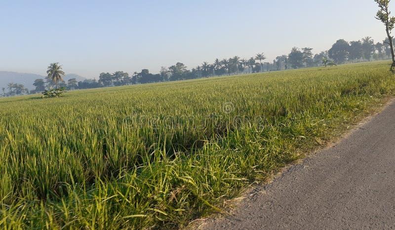Ricefield εκτός από την οδό στοκ εικόνες με δικαίωμα ελεύθερης χρήσης