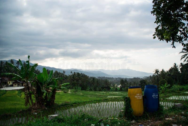Ricefield arkivfoton