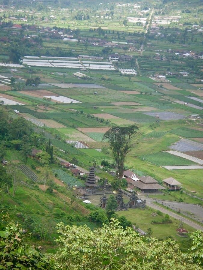 Ricefield in Bali met water royalty-vrije stock foto's