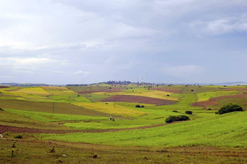 Ricefield en Birmanie Myanmar images stock