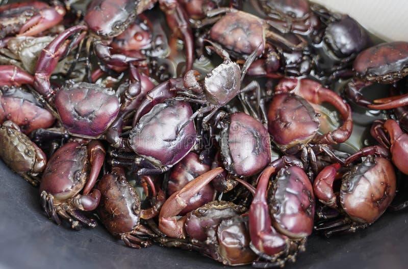 Ricefield-Krabben stockfoto