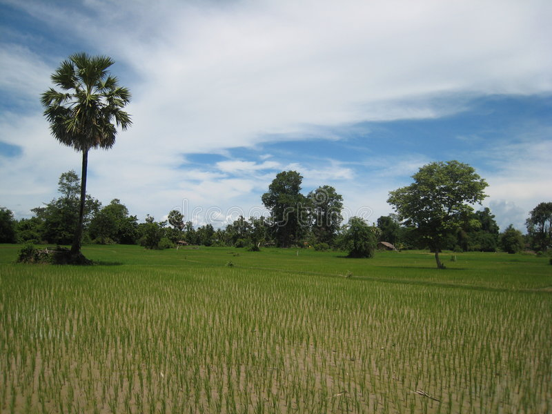 Ricefield in Nong Khiaw Laos stockfotos