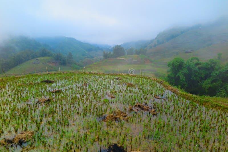 Ricefields в Sapa, Вьетнаме стоковые фотографии rf