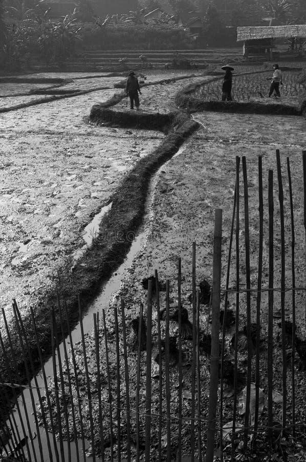Ricefields и фермеры 2 стоковое изображение