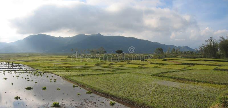 Ricefields de Cara com céu nebuloso, Ruteng, Flores, Indonésia, panorama imagens de stock royalty free