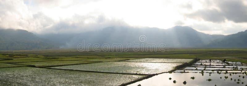 Ricefields di Cara con luce solare immagine stock