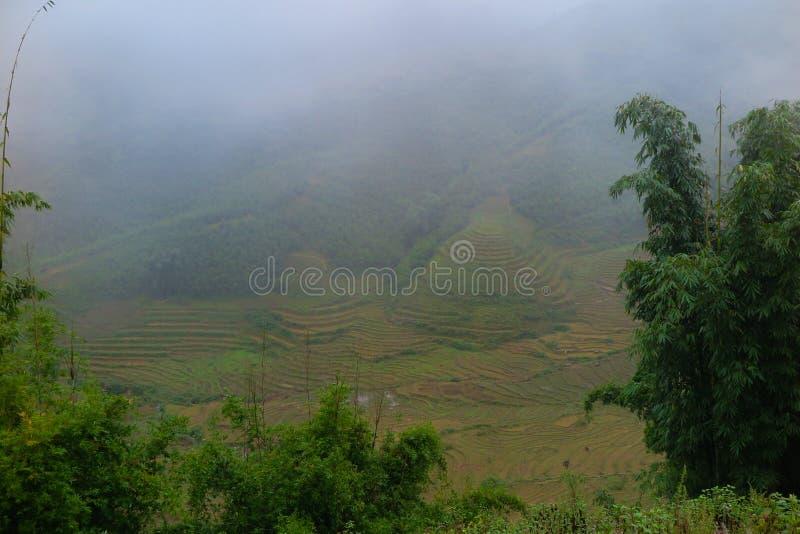 Ricefields em Sapa, Vietname imagens de stock