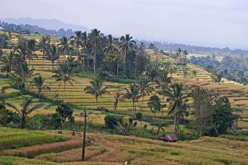 ricefields jatiluwih стоковое изображение