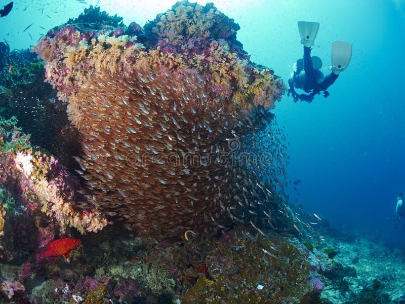 Ricefish/Glassfish στοκ φωτογραφία με δικαίωμα ελεύθερης χρήσης