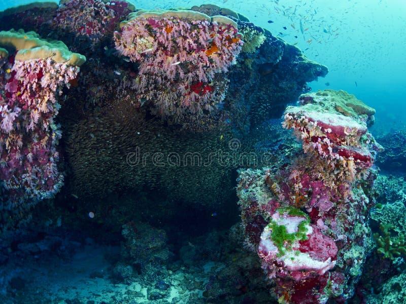 Ricefish/Glassfish στοκ εικόνες