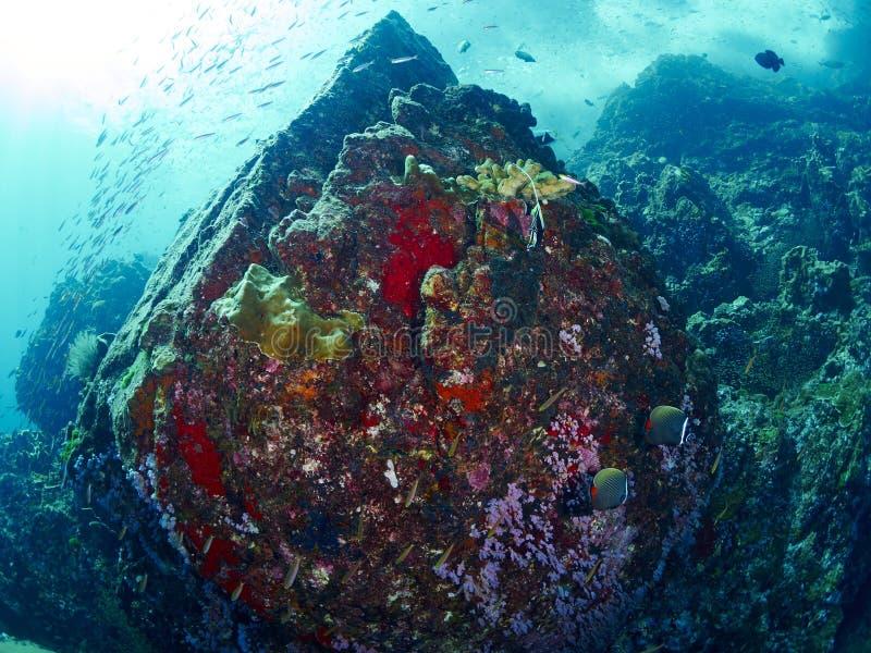 Ricefish/Glassfish στοκ εικόνα