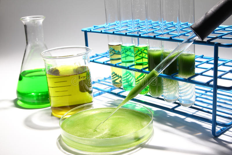 Ricerca del combustibile biologico delle alghe fotografie stock libere da diritti
