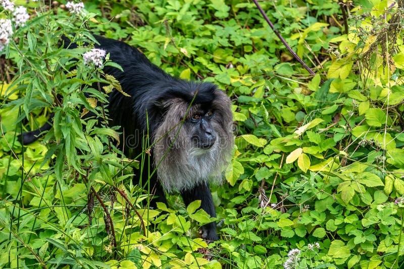 Ricerche del tamarin della primavera di alimento immagini stock libere da diritti