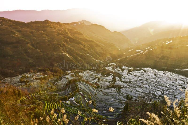 ricesolnedgångterrasser fotografering för bildbyråer