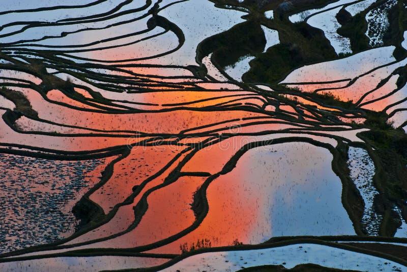Riceterrasser av yuanyang royaltyfria bilder
