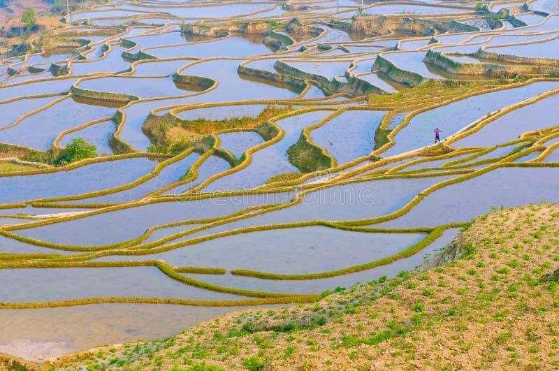 Riceterrasser av yuanyang, yunnan, porslin arkivbild