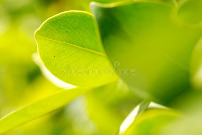 Rich foliage. Macro shot, shallow dof royalty free stock photos