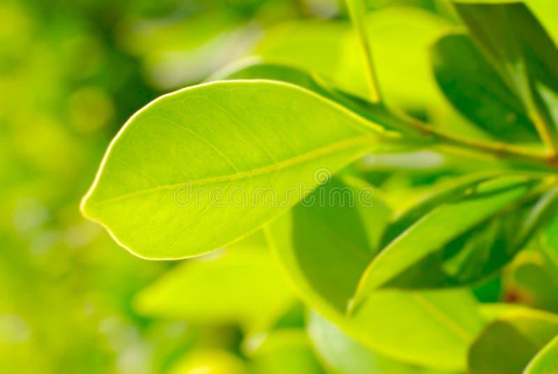 Rich foliage. Macro shot, shallow dof royalty free stock photography