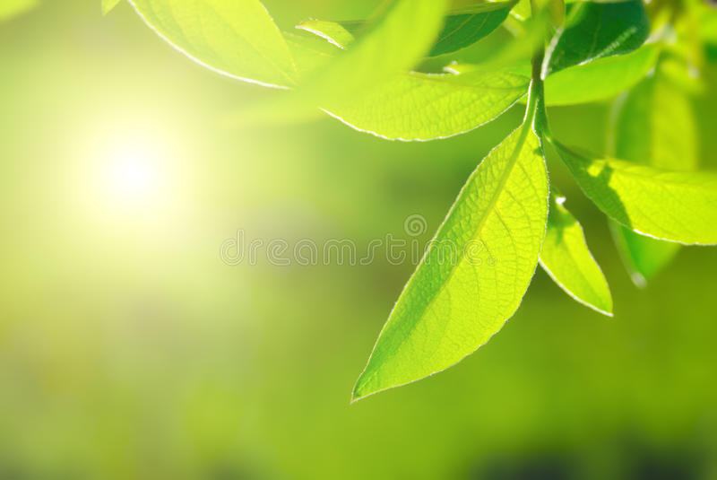 Rich foliage. Closeup of rich foliage backlighted by sun royalty free stock photos
