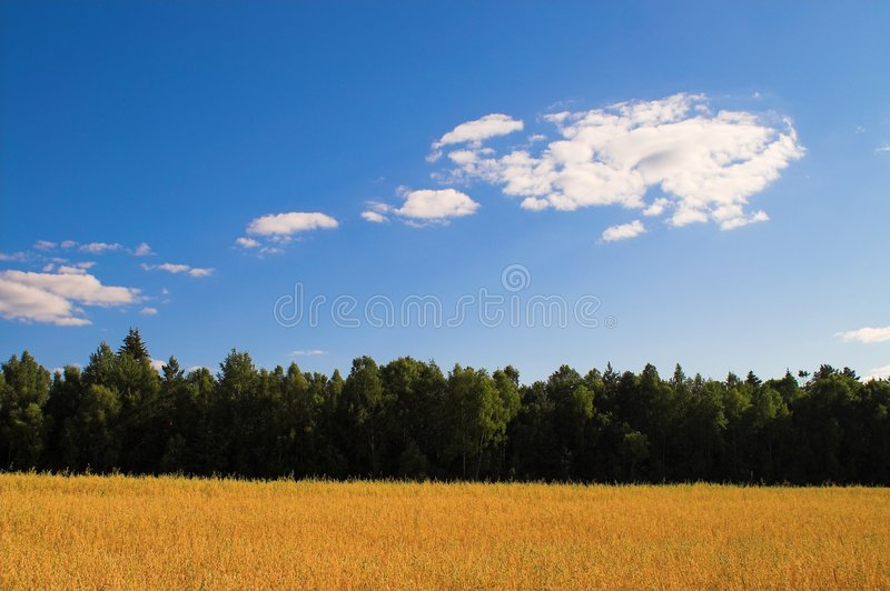Rich harvest royalty free stock photography