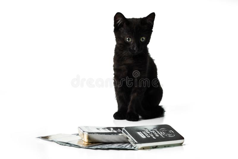 Rich kitten. A black kitten sits near the gold and silver bars and cash dollars. Selective focus stock images