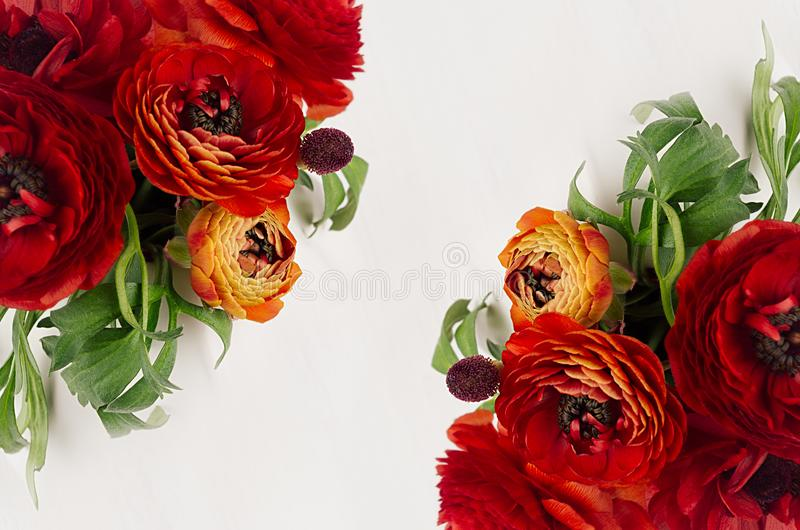 Rich red buttercup flowers with green leaves top view as decorative border on white background. Elegance spring bouquet. stock photos
