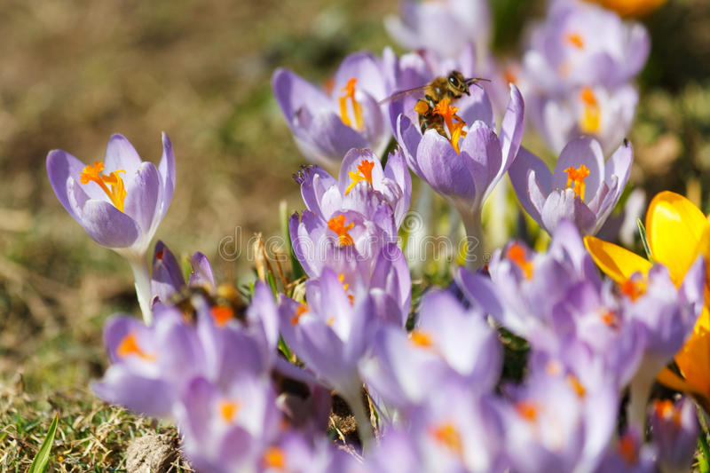 Download Rich spring flowers stock photo. Image of hoot, mild - 24169014