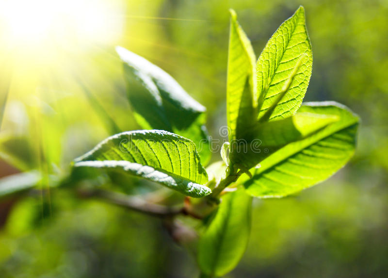 Rich tree leaves. Illuminated by sun royalty free stock photography