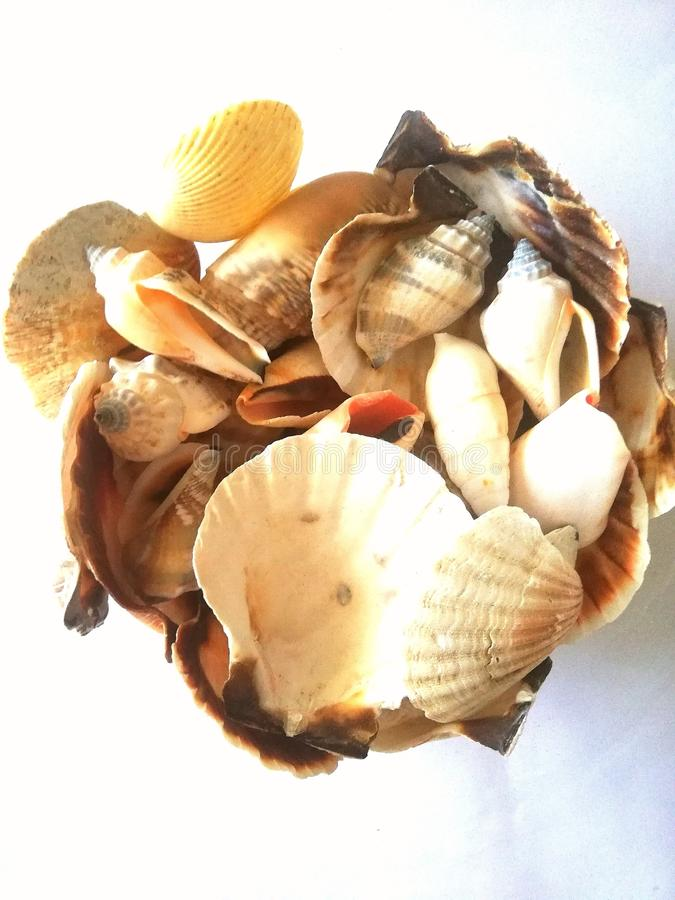 Riches of the sea. Scallop, paradise, beach stock photography
