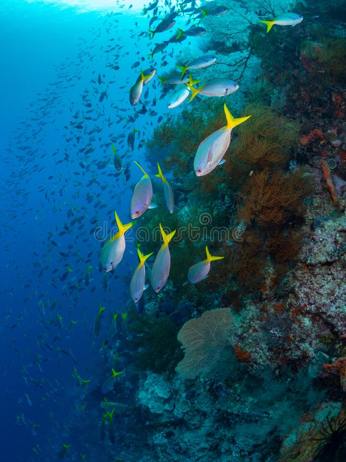 Richest reefs in the world. Misool, Raja Ampat, Indonesia. The reefs in the Misool Marine Protected Area within Raja Ampat, Indonesia, are the richest on earth stock photo