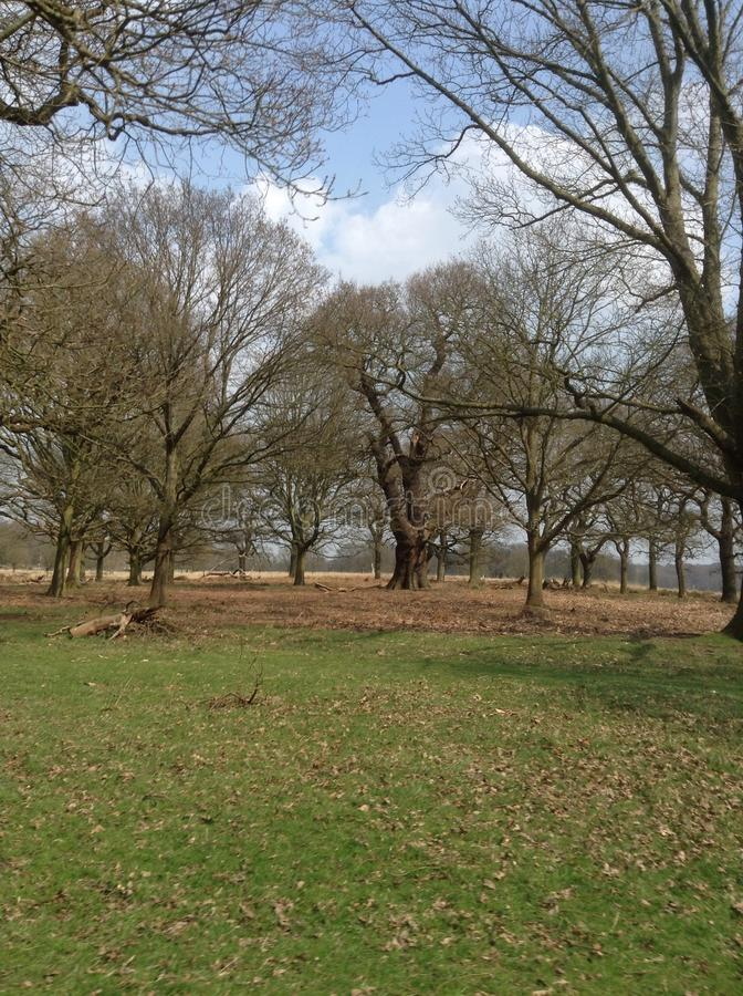 Richmond Park lizenzfreies stockbild