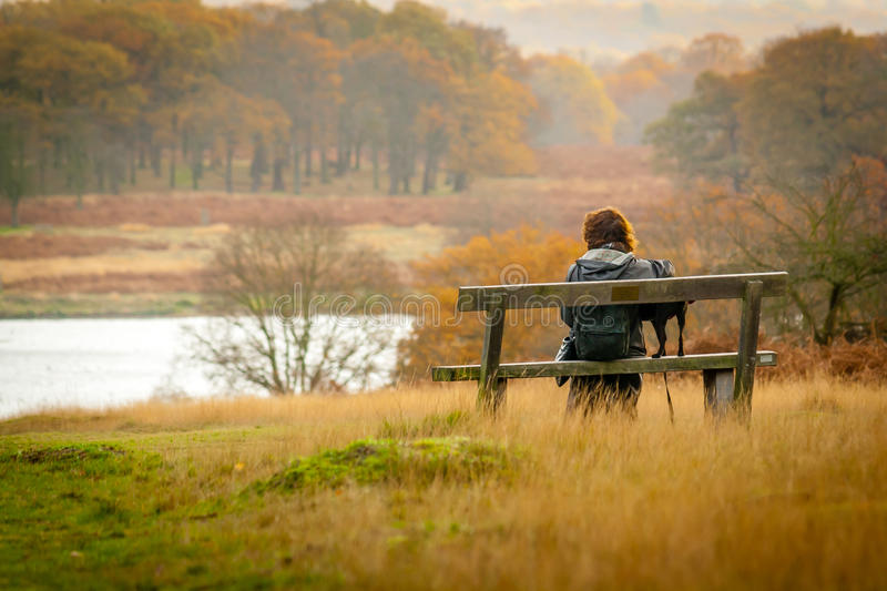 Richmond Park stockfoto
