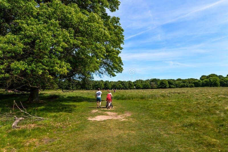 Richmond Park in de zomer - Londen, het UK royalty-vrije stock afbeelding