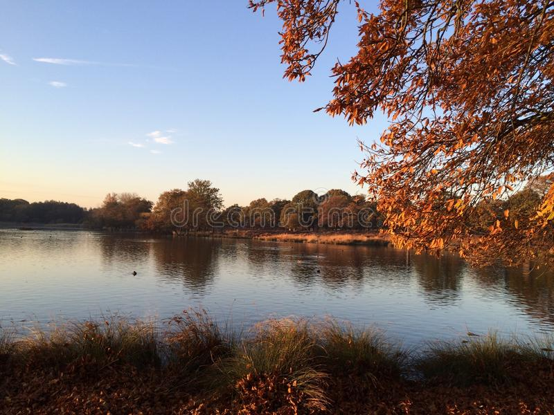 Richmond park stock images