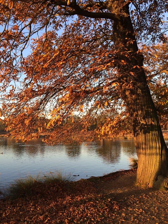 Richmond park royalty free stock image