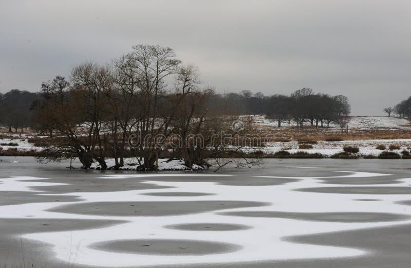 Richmond-Park im Schnee lizenzfreies stockfoto