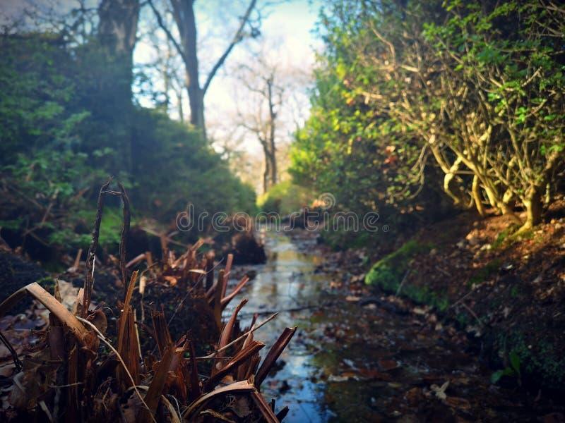 Richmond Park, Londen, het Verenigd Koninkrijk stock foto's